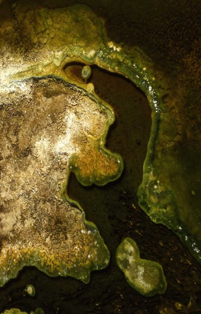 Algae in thermal water Picture