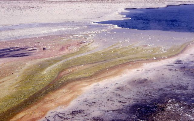 Algae colors in Lower Geyser Basin Picture