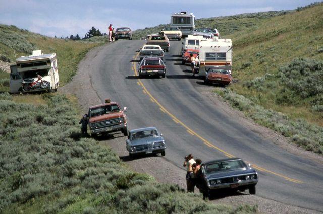 Traffic in Hayden Valley Picture