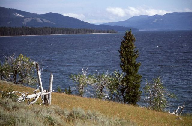 Shore of Yellowstone Lake on the southeast arm Picture