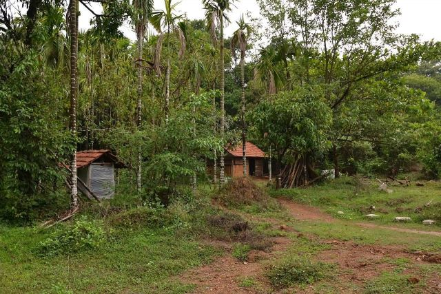 Agumbe, Karnataka Picture