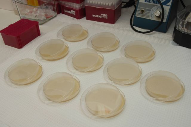 Cloning dishes in NIMH IRP research lab Picture