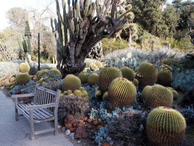 Barrel Cactus Picture
