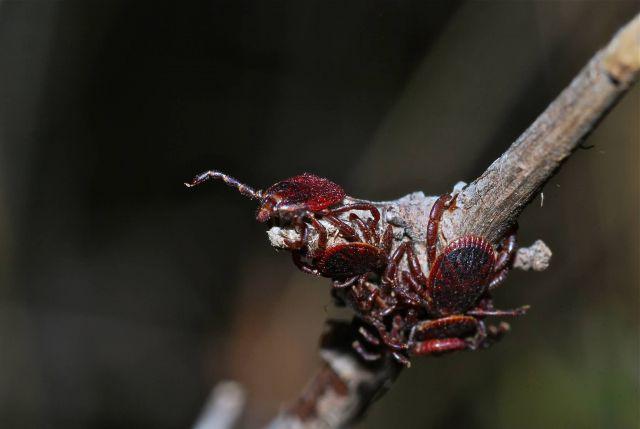 Ticks Picture