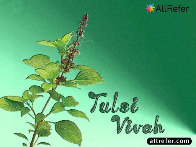 Tulsi Vivah (तुलसी विवाह) Picture