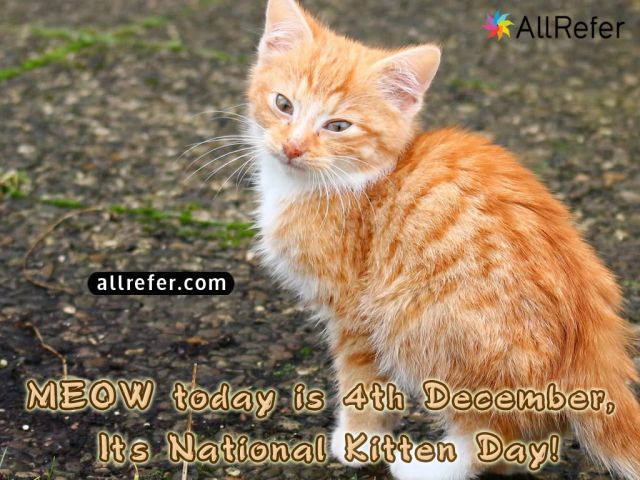 National Kitten Day - 4 December Picture