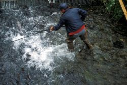 Dipnetting Salmon at Hidden Creek Photo