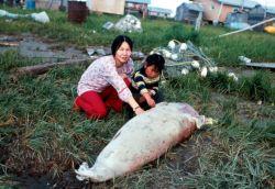 Seal - Subsistence Photo