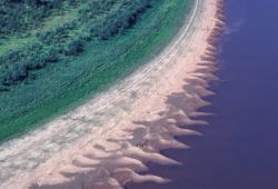 Innoko River Shoreline Photo