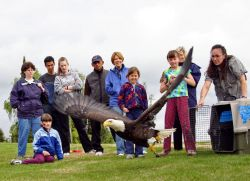 Eagle Release During Migratory Bird Day 2005 Photo