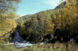 Russian River Photo