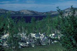 Sithylemenkat Lake Near Bettles Photo
