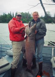 King Salmon Caught on the Kenai River Photo