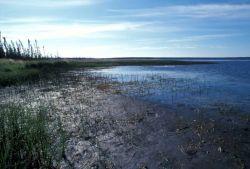 Shoreline Vegetation Photo