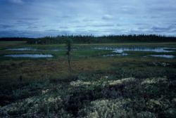 Wetland Landscape Photo