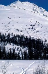 Wood River Drainage in Winter Photo