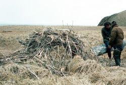 Bald Eagle Nest Photo