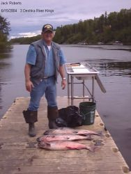 Three King Salmon On Deshka River Photo
