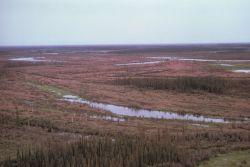 Yukon Flats Refuge Wetlands Photo