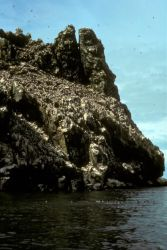 Bird Rock at Cape Newenham Photo