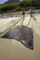 Forage fish research, Big Koniuji Island, Shumagins Photo