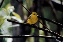 Warbler Photo