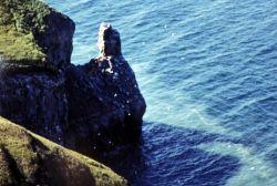 Cape Thompson, 1991 Photo