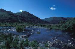 Kodiak Stream and Mountains in Summer Photo