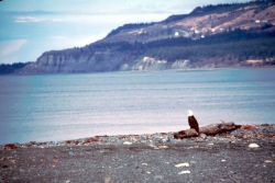 Bald Eagle on Beach Photo