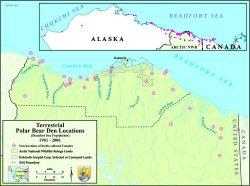 Information map: Polar bear denning 1981-2001 Photo