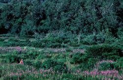 Interior Kodiak in Summer Photo