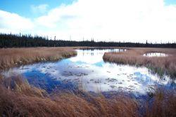 Deadman Lake in Summer Photo