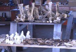 Whale Bones Photo