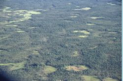 Black Spruce Forest Photo
