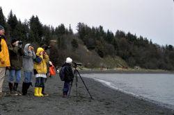 Homer, Shorebird Environmental Education Photo