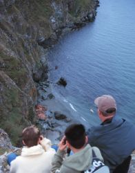 Walrus Viewing at Cape Peirce Photo
