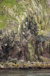 Koniuji Island bird cliffs Photo