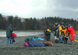 Homer, Shorebird watching in Kachemak Bay Photo