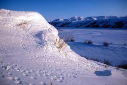 Noatka River Tracks in Snow Photo