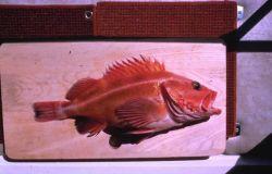 Yellow Rockfish Photo