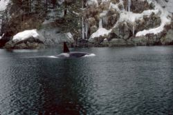 Orca in Prince William Sound Photo