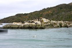 Cormorants and Gulls on Sea Rock Photo