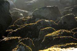 Chowiet Island beach kelp Photo