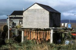 Fish Drying in Village of Togiak Photo