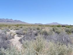 Desert Environment in the Desert National Wildlife Refuge Photo