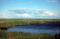 Sedge Marsh Photo