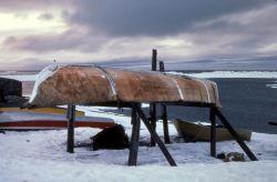 Umiak Skin Covered Boat Photo