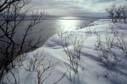 Shore of Nushagak Bay/River Photo