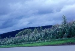Yukon River and Shoreline Photo