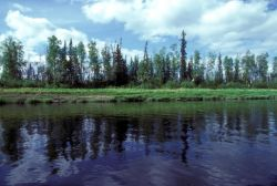 Kanuti Refuge River Photo